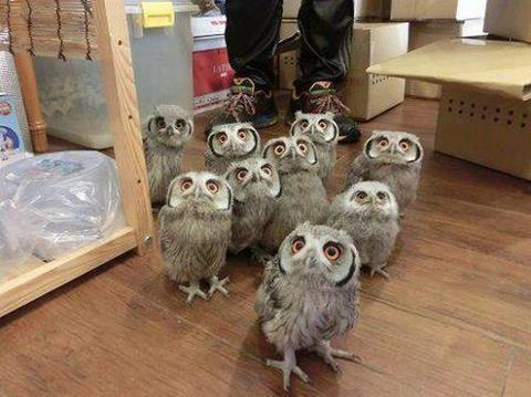 Owl_Party
